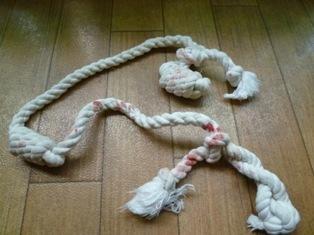 サクラのロープ?1126.JPG